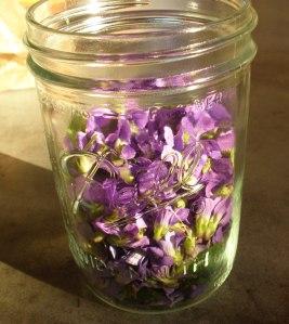 fresh violets